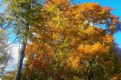 Осень в деревьях.