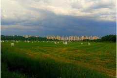 Скошенные  луга в городе Брест.