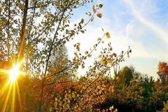 Осень в молодом лесу.