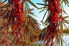 Плоды осени на берегу реки.