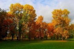 На опушке  лиственного  леса.