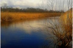 Водные каналы болотной местности.