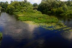 Острова и поросли на реке Мухавец в Бресте.